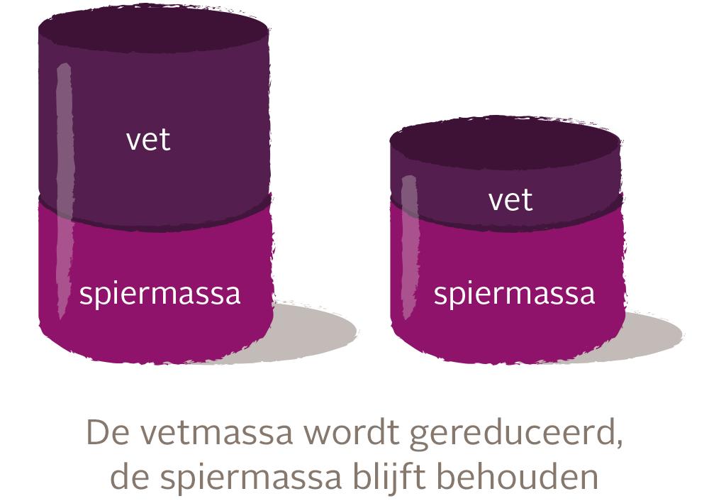 Muskelmasse NL