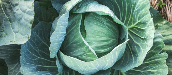 superfood lokaal afvallen en gezond leven